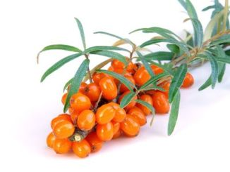 Sea Buckthorn on a white background.