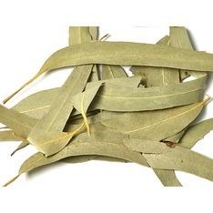 Dried eucalyptus leaves.