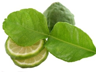 Garden picked kaffir lime for Asian dish, isolated on white background