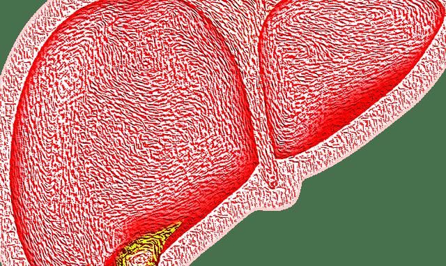 Diagram of a liver.