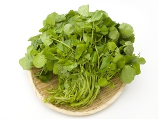 Watercress on a white background.
