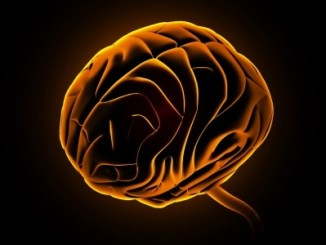 Image of a brain picked out in orange on a black background. View from side and top.