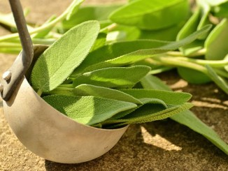 Sage in a bowl. Source of sage oil