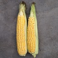 sweetcorn-Incredible -simply seeds