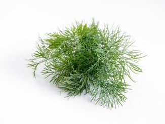 Dill on a white background.