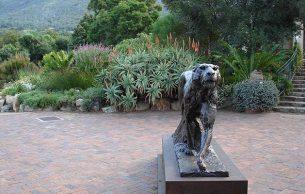 Kirstenbosch gardens by Jacci Ramage