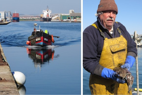 Brighton Newhaven Fish Sales