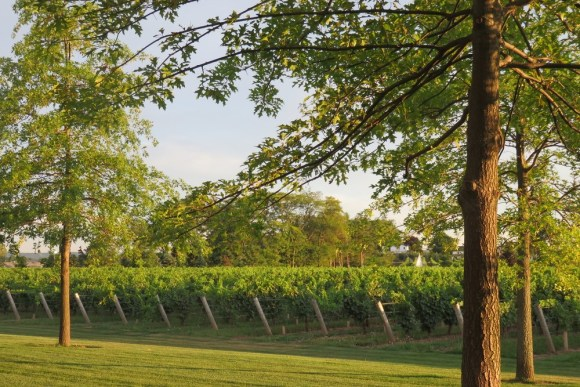 two sisters vineyards 2