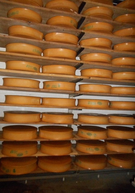 Beaufort cheeses maturing at the Saint Sorlin Cooperative Dairy