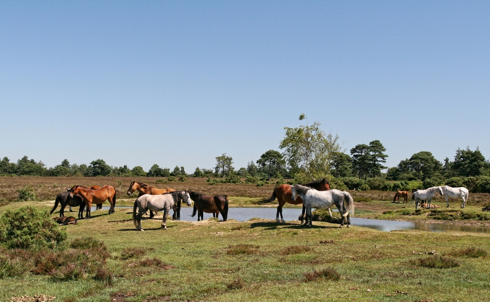 Dating new forest
