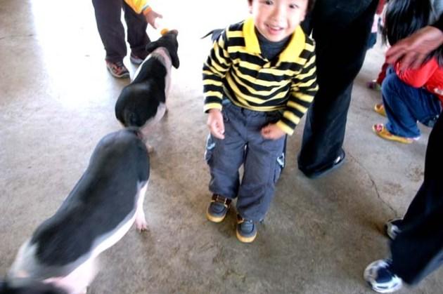 【到處玩】台南縣_柳營鄉_乳牛的家