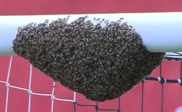 Swarm of bees on crossbar at game between Associação Atlética Ponte Preta and Clube Atlético Sorocaba in Brazil