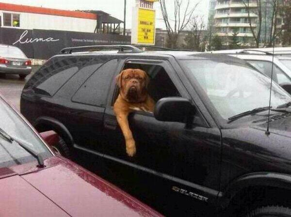 The Harry Redknapp dog, one of the best transfer deadline day jokes