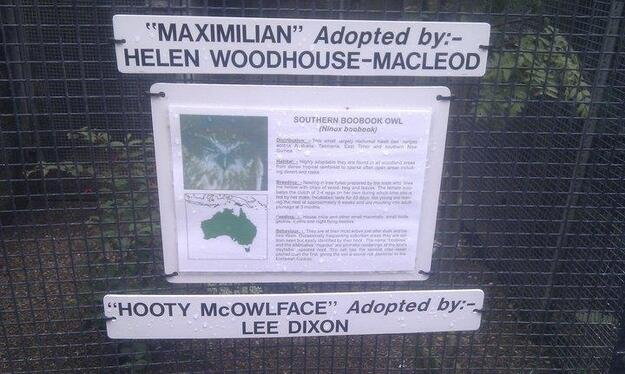 Lee Dixon adopts an owl, Hooty McOwlface