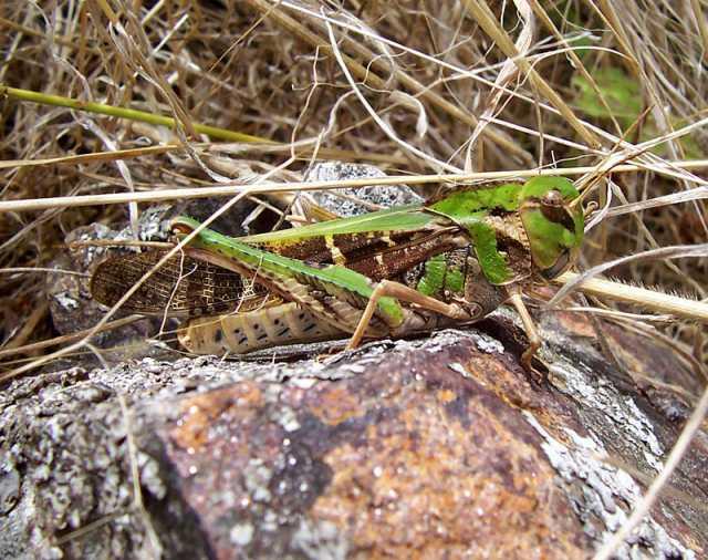 James Rodríguez insect