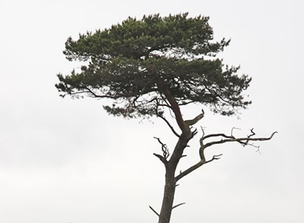 Some of the Marouane Fellaini jokes from Man Utd 0-0 PSV likened the substitute to a tree