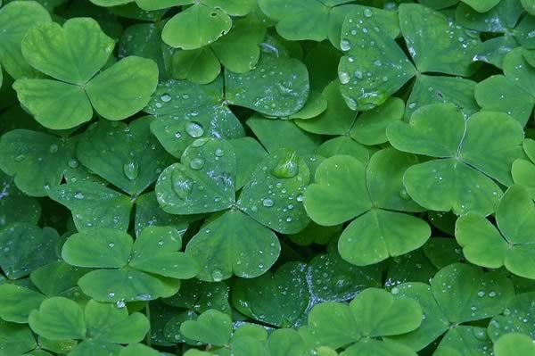These clovers wish they could hear the jokes as Ireland are knocked out of Euro 2016 following a 2-1 defeat to France