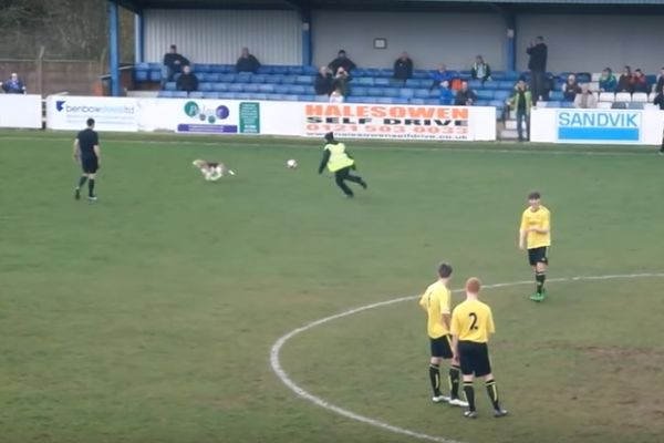 A dog stops play for seven minutes at Halesowen Town vs Skelmersdale, a match its owner was playing in