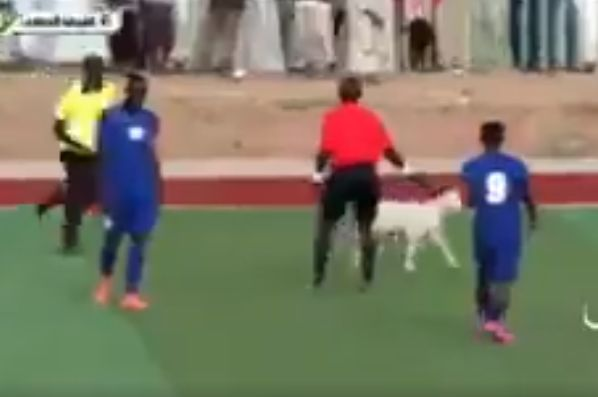 Goat invades pitch during Sudanese league match