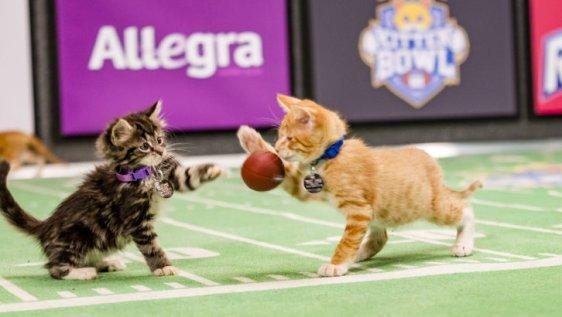 Kitten Bowl