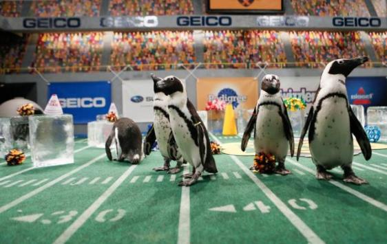 Puppy Bowl Penguins
