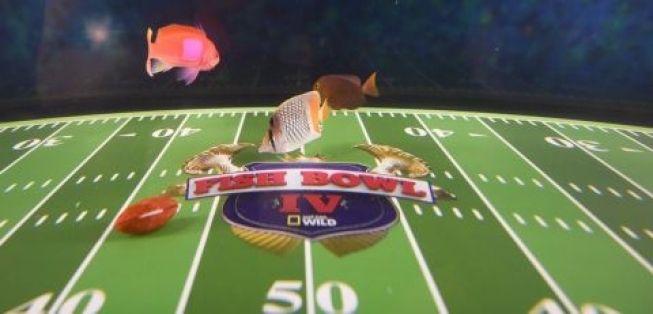 Fish Bowl IV