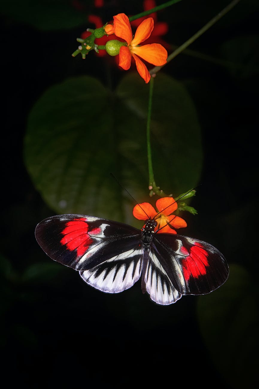 close up photo of butterfly perched on flower