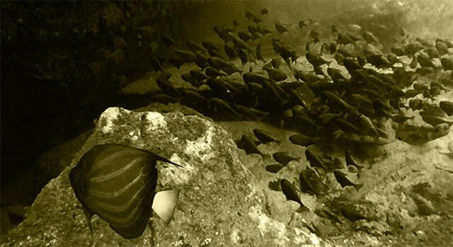 underwater-fish