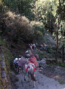 Donkeys walking down steps carrying gas cylinders