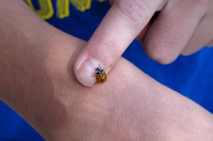 IMG_6983_ladybug2