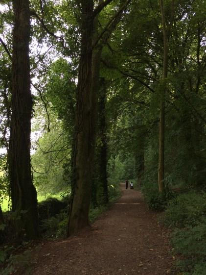 Manscombe Wood in Cockington