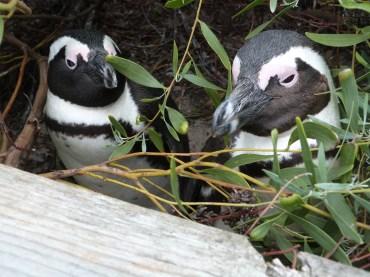 Nippy penguins - mind your fingers!