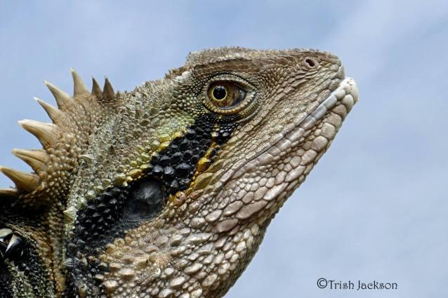 Lizard Close-up