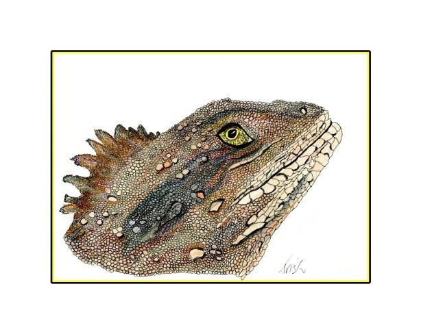 Foot drawn Lizard.
