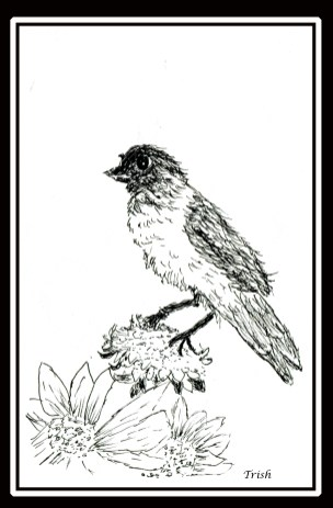 A little bird I drew with my foot.