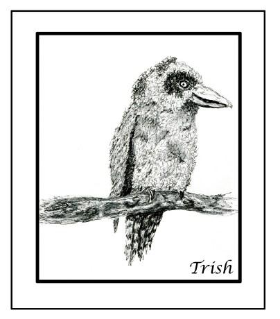 foot drawn kookaburra