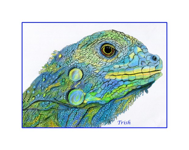 Another Lizard that I drew.