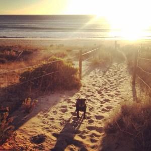 My childhood dog, Kaj, in the sand dunes at Port Noarlunga Beach..