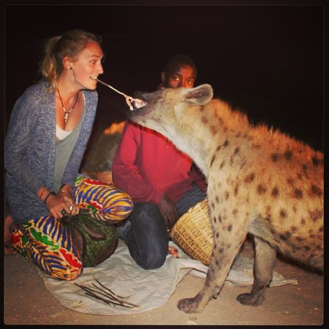 Feeding the hyenas!!