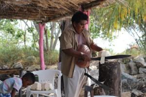 Fresh coconuts..