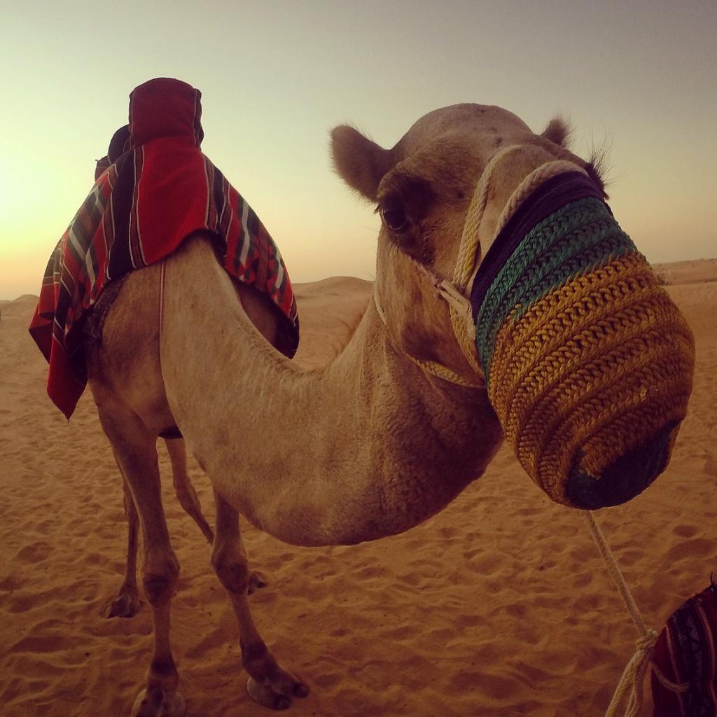 An extended stopover to explore Dubai…