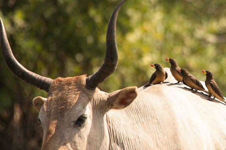 Gambia photography   Wetlands   Gambian wildlife