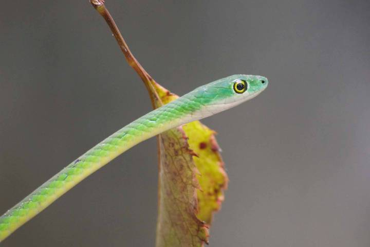 Gambia activities | Snakes & reptiles | snake
