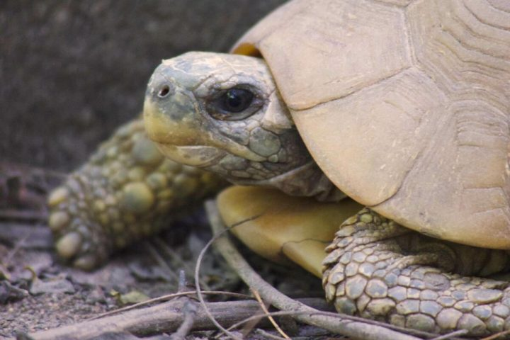 Gambia activities | Snakes & reptiles | turtle