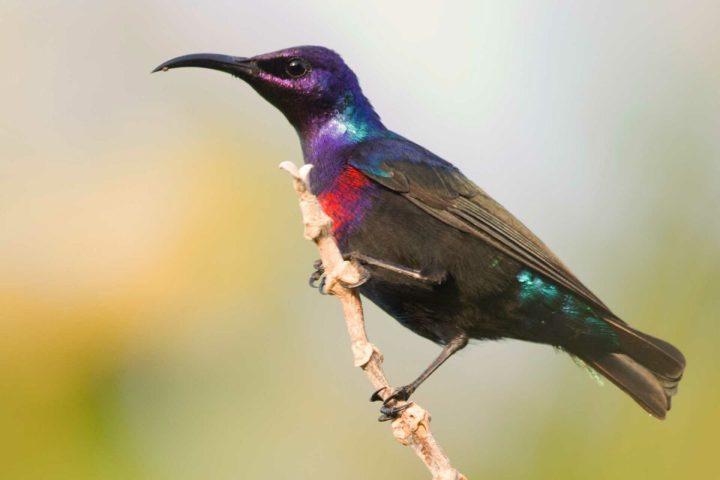 Gambia activities   Birding Gambia