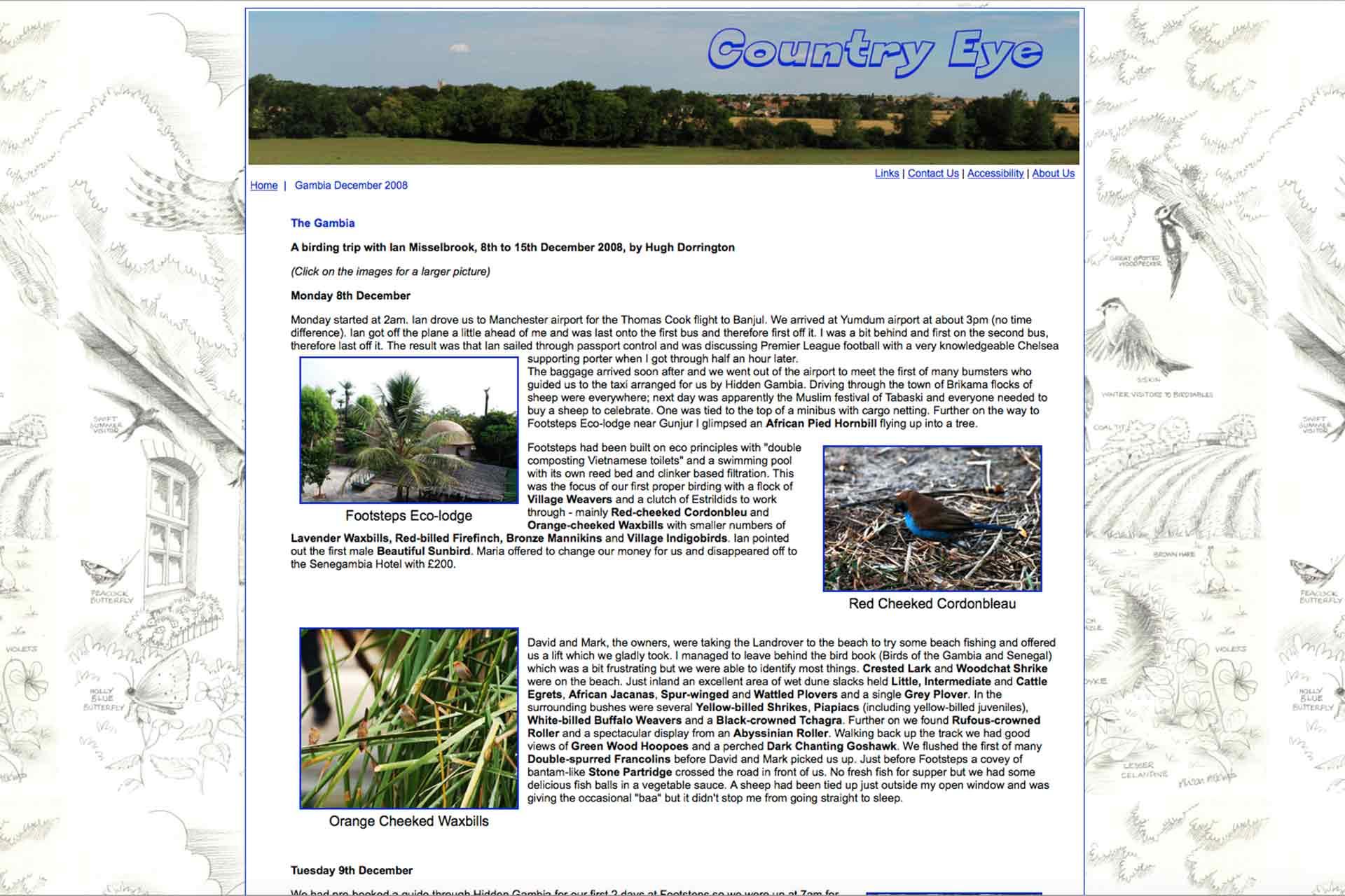 Gambia birding   Website Ian Misselbrook