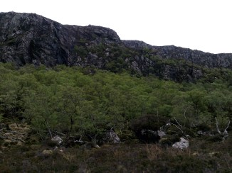 Gleann Dubh ancient woodlands 3
