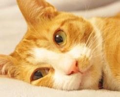 横になって休んでいる猫の画像