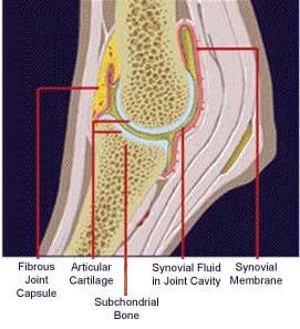 joint_structure