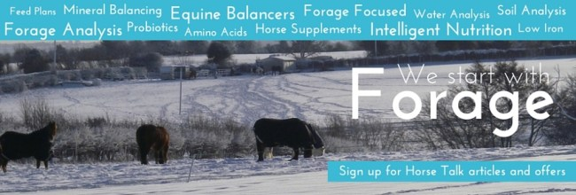 Forageplus Winter Horse Feed and Supplements